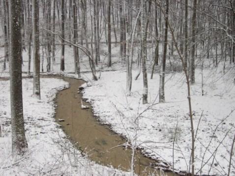 forest creek / pârâiașul din pădure