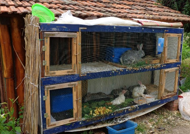 The spacious, easy to clean rabbits home by Mr Mircea (RO)