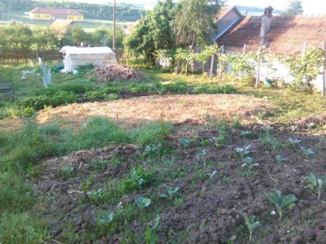 Vărzoase, în faţă e parcela cu dovlecei. urmată de cartofi, grămada de gunoi pt anul viitor, solarul iar după sunt roşiile