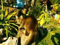 Brida, our cat