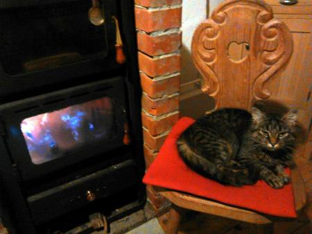 cat near the stove